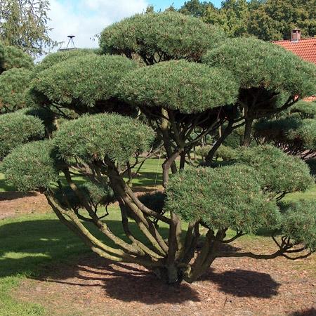 Grätz Gartenpark grätz garten park hüllhorst interaktiv erleben